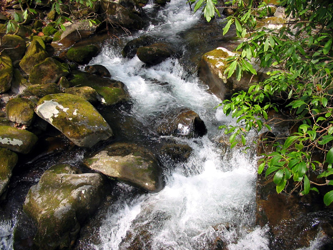 Water flowing over slick rocks on the Kephart Prong Trail